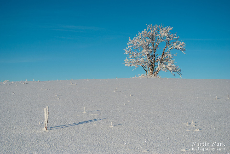Lumine pihlakas
