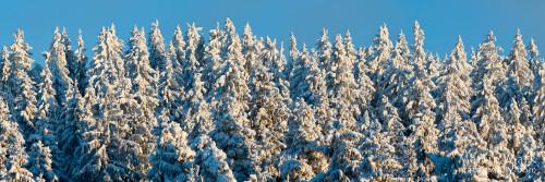 Lumised kuused Haanjas