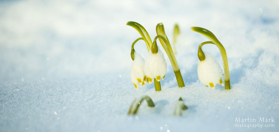 Lumine märts