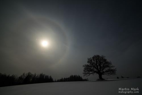 Tamm ja kuu halo