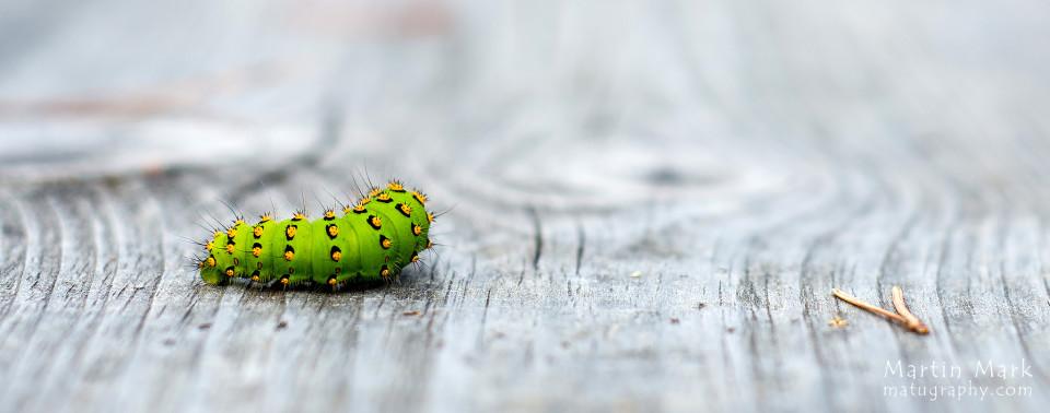 Roheline elukas