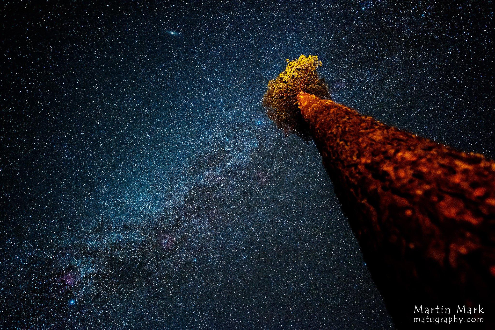 Ilmapuu